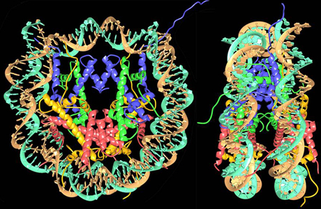 Solving the nucleosome: twenty years on